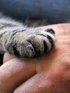 a cat or kitten paw with claws