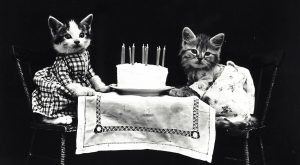 4 Cheap Ways To Celebrate Your Cat's Birthday