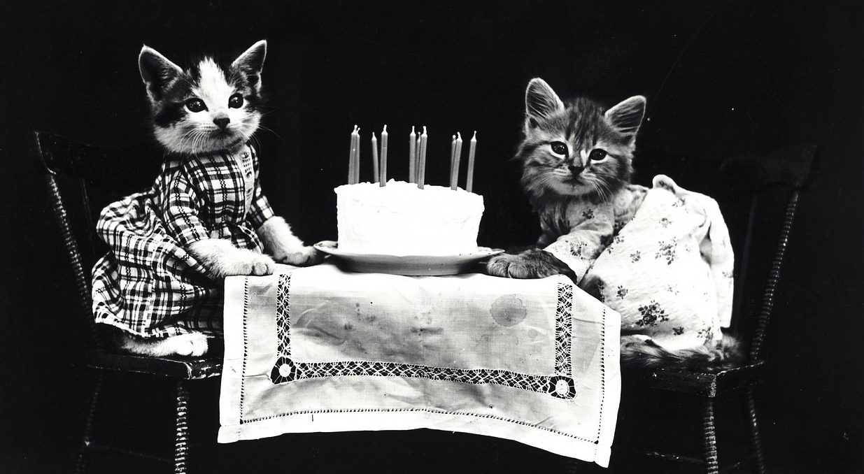 You are currently viewing 4 Cheap Ways To Celebrate Your Cat's Birthday
