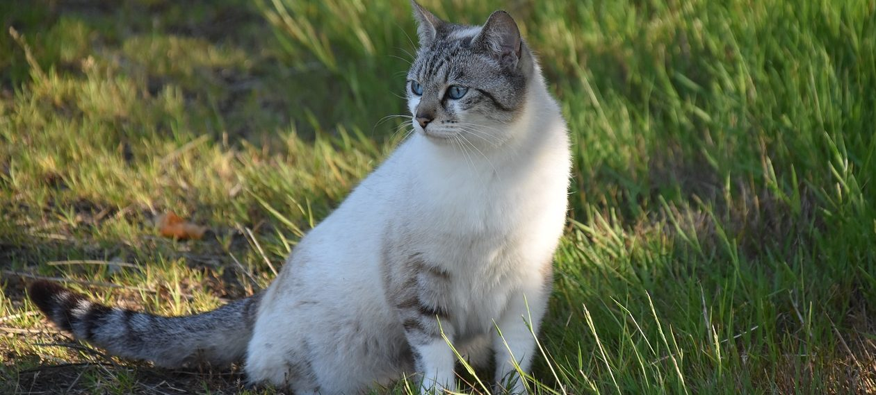 Read more about the article How To Clean Cat Urine