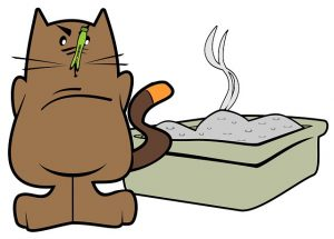 how to clean cat urine