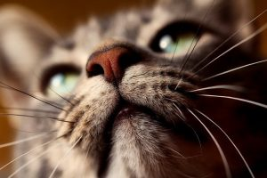 5 facts about cat whiskers you probably didn't know
