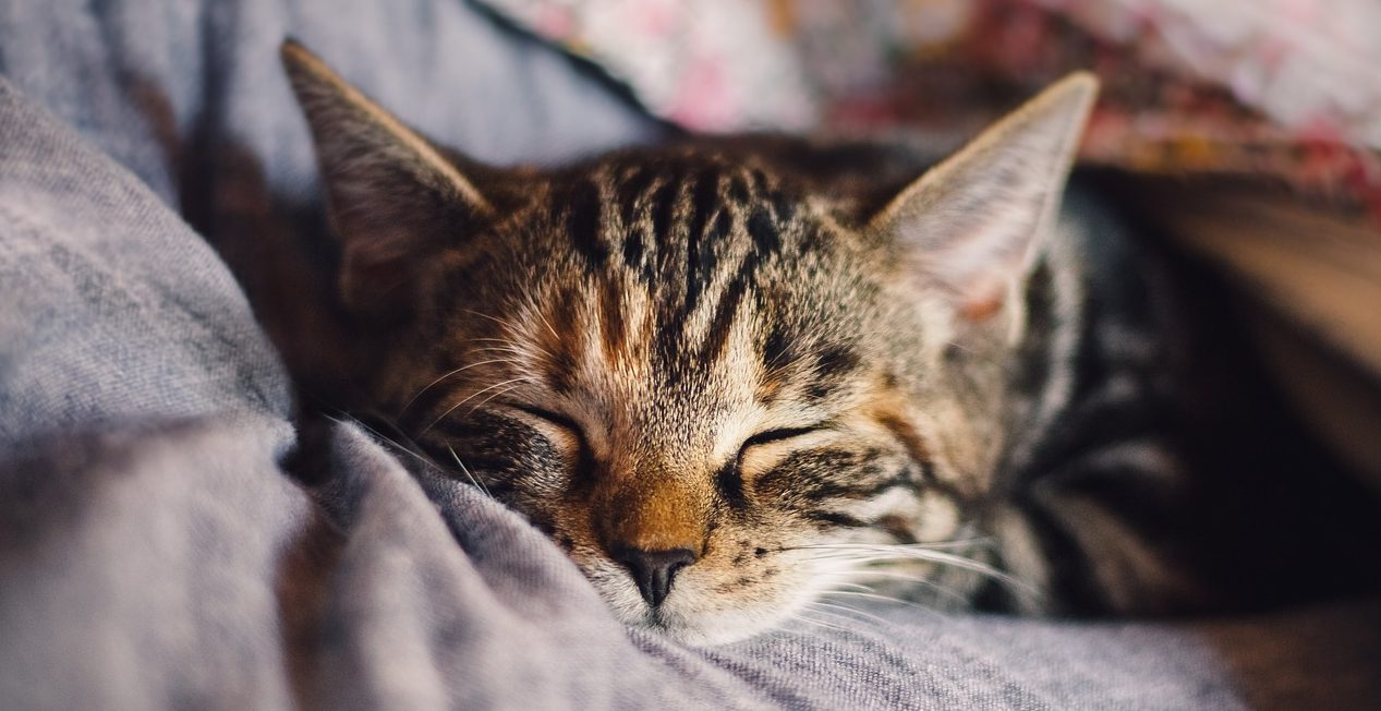 Can My Cat Catch My Cold?