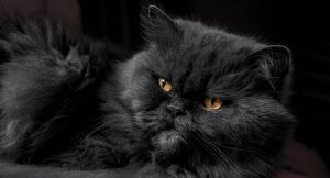 Read more about the article Why Does My Cat Purr?