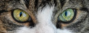Read more about the article Why Does My Cat Stare At Me?