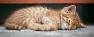 Where Do Cats Like to Sleep at Night?