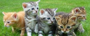 How to Train Kittens to Use a Litter Box