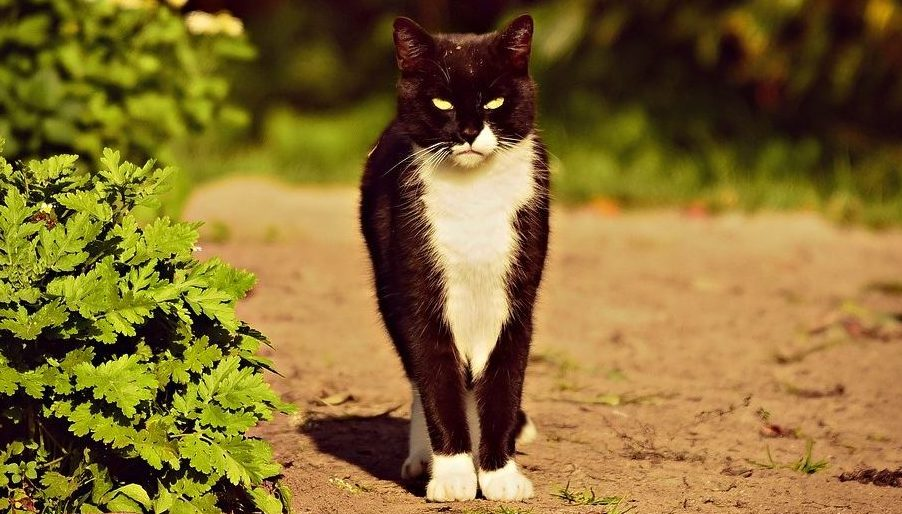 Read more about the article How To Find Your Lost Cat