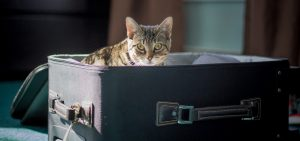 Read more about the article 10 Tips For Traveling With Your Cat