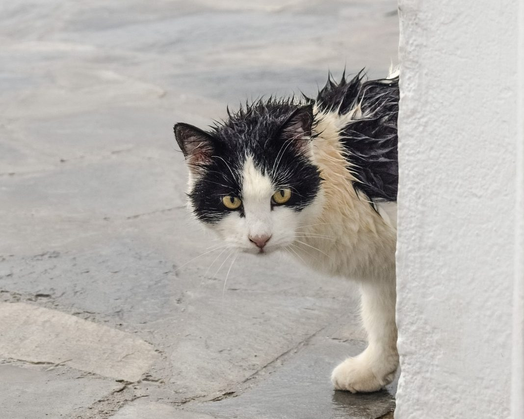 Read more about the article How To Give a Cat a Bath Without Dying