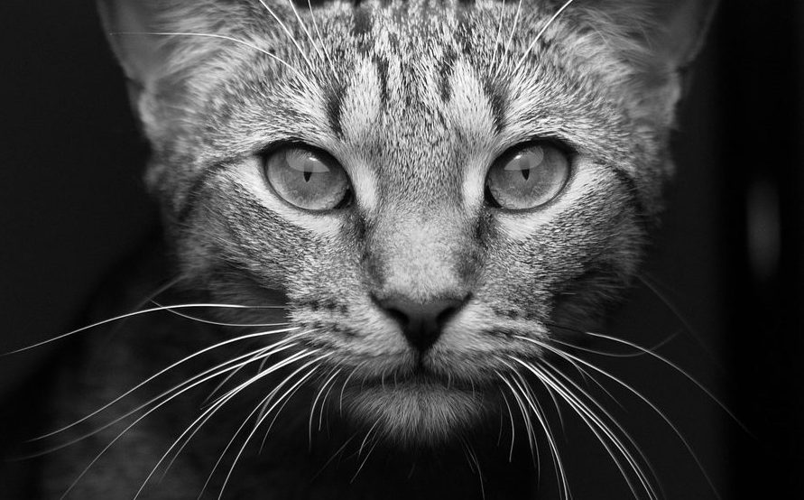 Read more about the article 5 Facts About Cat Whiskers You Probably Didn't Know