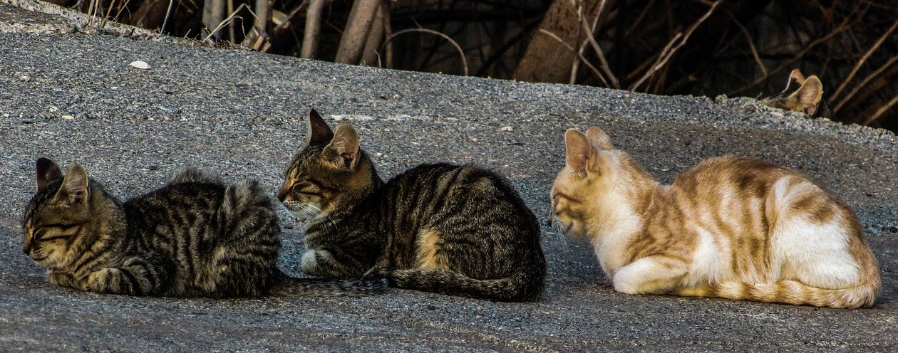 Read more about the article How To Introduce A New Cat Into Your Home