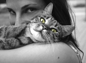 how to tell if your cat actually loves you