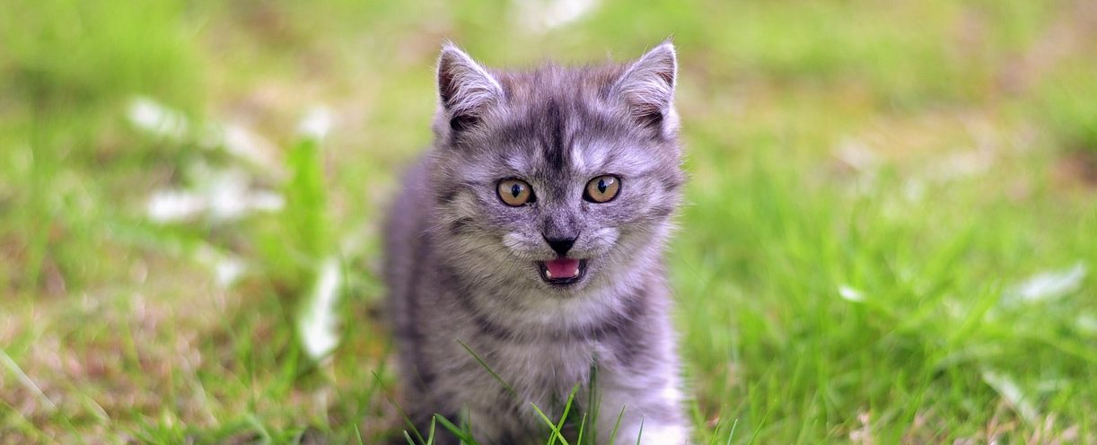 Read more about the article How To Understand Your Cat