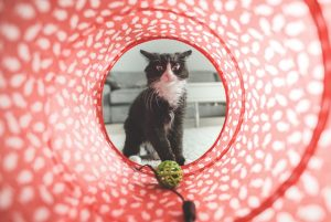 Read more about the article Top 10 Cat Toys For 2020