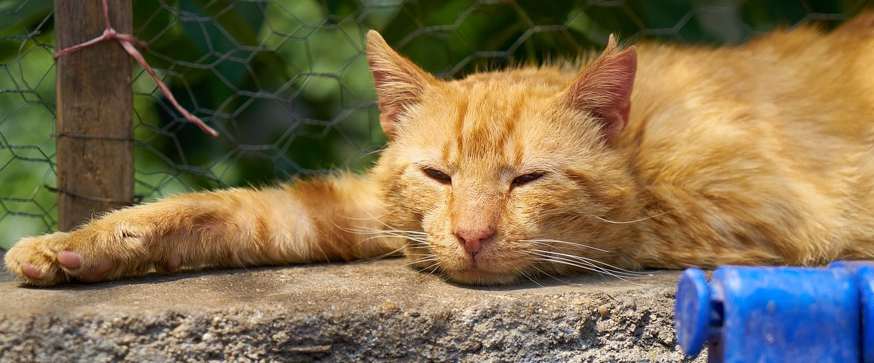10 Signs Your Cat Is In Pain