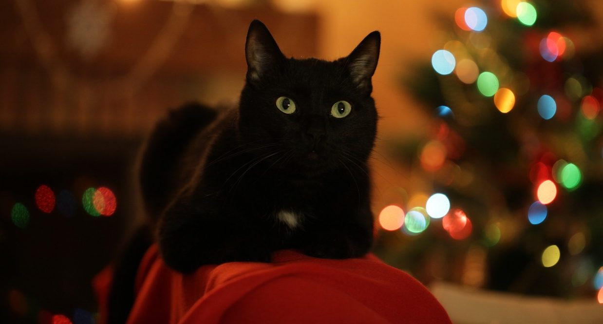 What Are The Best Christmas Gifts For Cats?