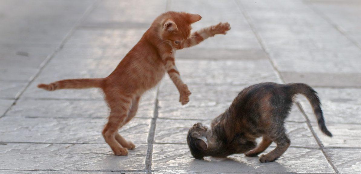 Top 10 Cat Myths Debunked