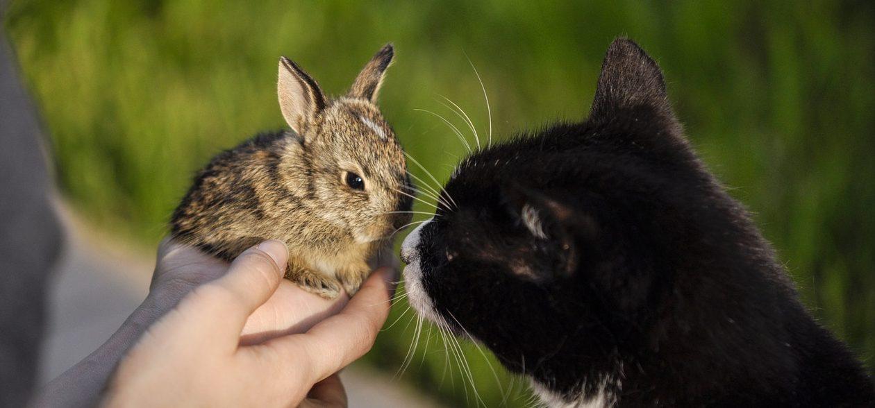 Will My Cat Kill My Rabbit?