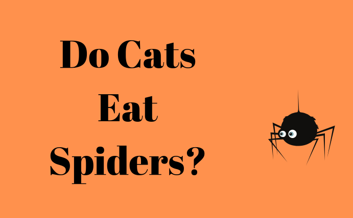 Can Cats Eat Spiders?