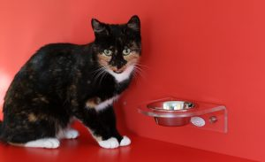 Read more about the article Does My Cat Need Wet Food?