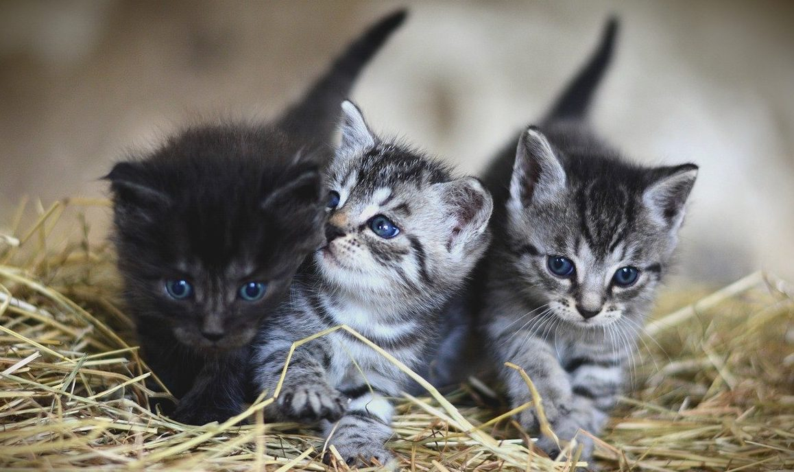 When Can Kittens Be Given Away?