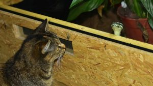 Can Cats Eat Snakes?