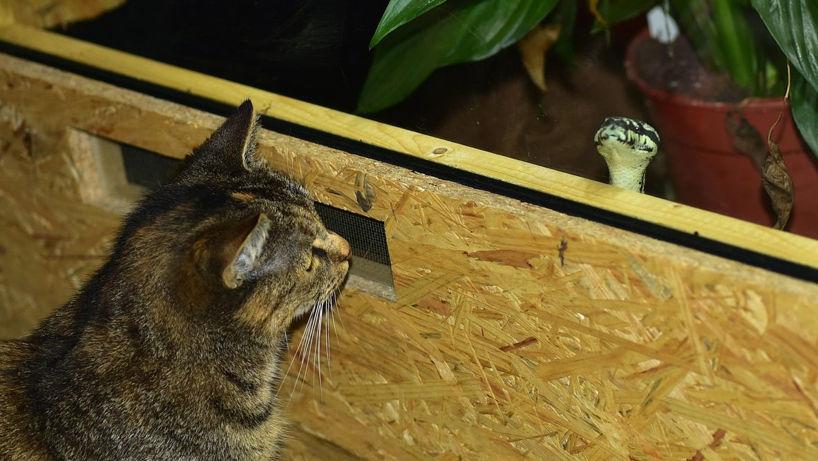 Read more about the article Can Cats Eat Snakes?
