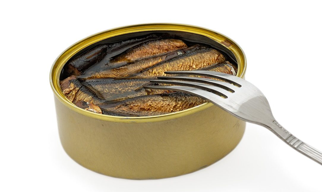You are currently viewing Can Cats Eat Canned Salmon?