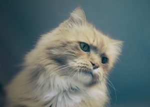 How Do I Stop My Cat From Shedding?