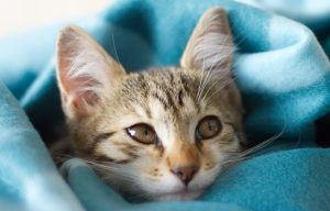 How to Tell If Your Cat Has a Cold
