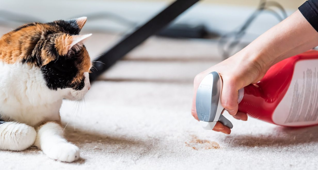 Read more about the article Why Does My Cat Poop Outside the Litter Box?
